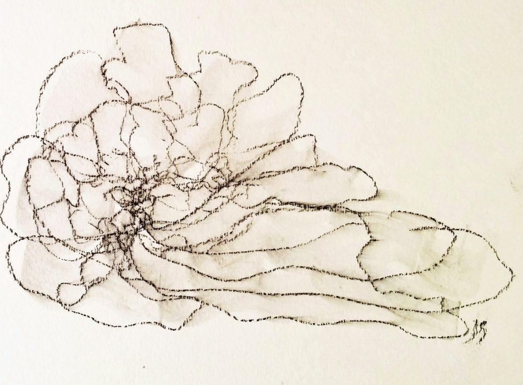 Rose des sables - Desert Rose